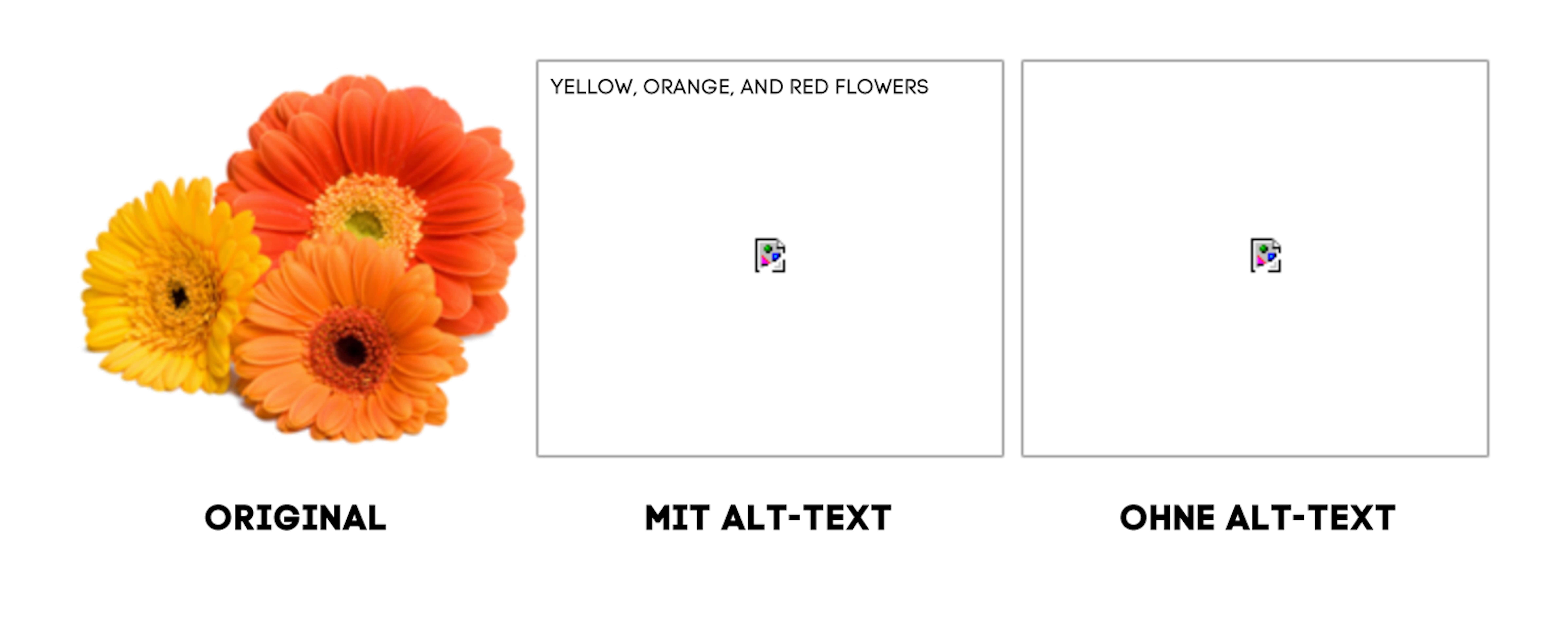 ALT-Text Beispiel
